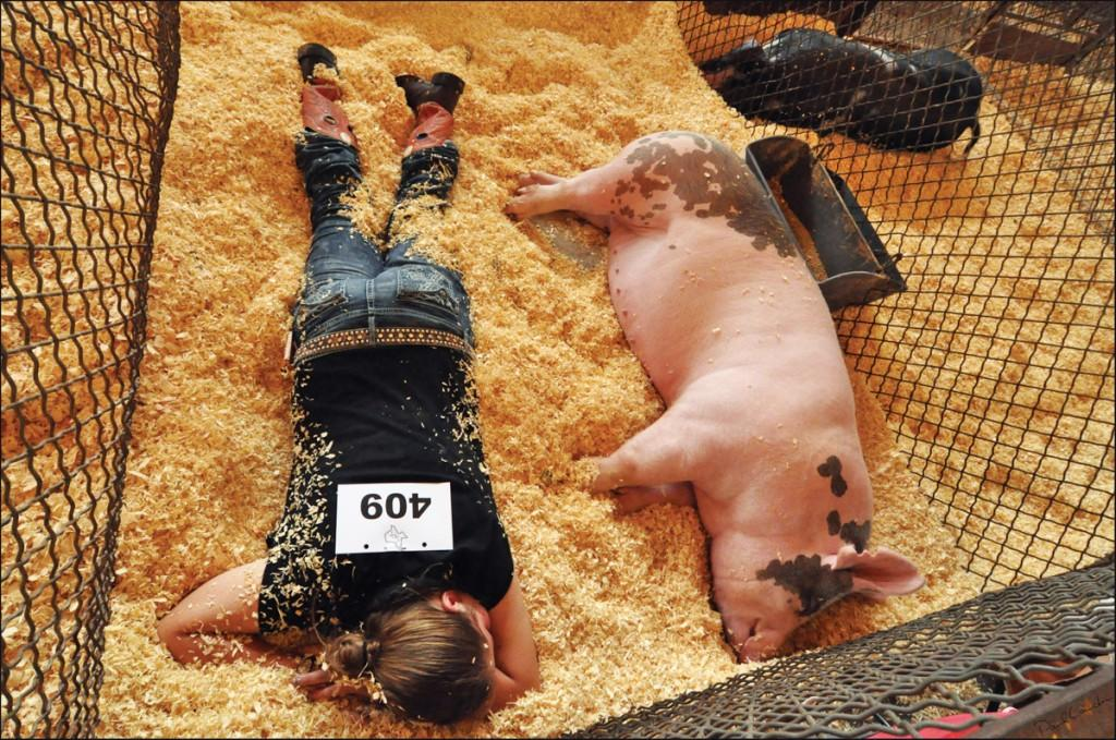 Paul Lauder's winning photograph features a child napping with her show pig after a long day of competing.