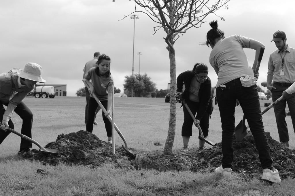 Photos by Willie  R. Cole | Courier Asako Saiko and Tanya Hernandez dig a deep hole to plant the tree while Richard Leon observes.