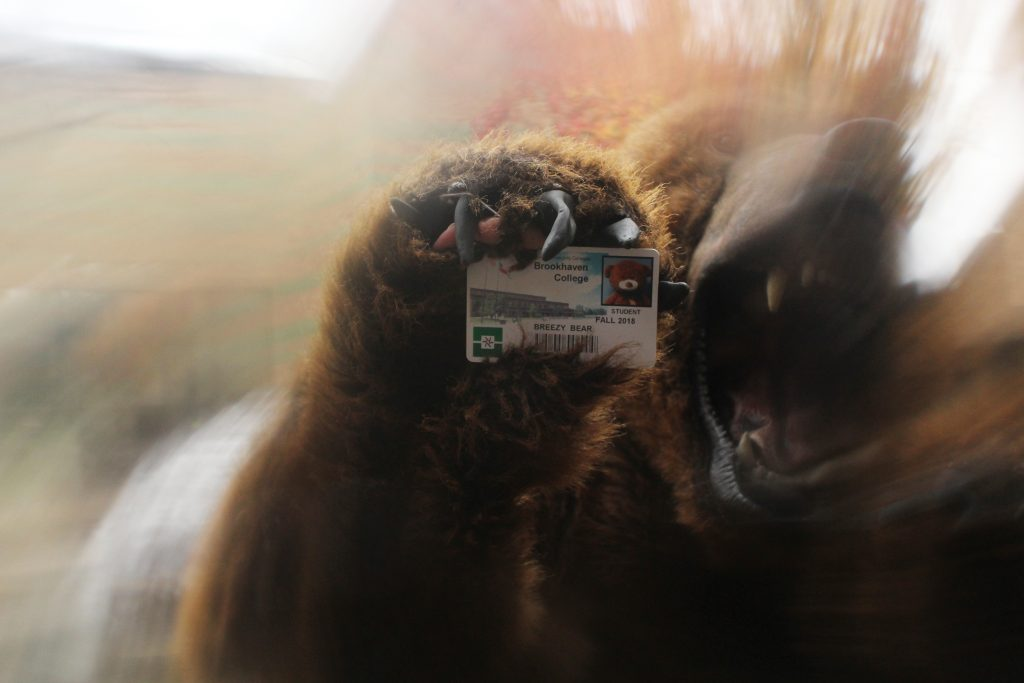 Bear+ID