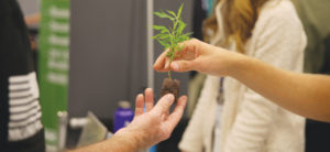 Photo by Dr. Dank | A cannabis plant is passed at the Lucky Leaf Hemp Expo Sept. 21.