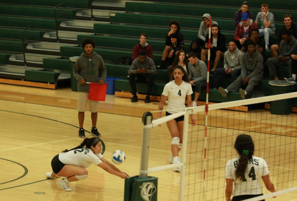 Photo by Brandon Donner | Bears defensive specialist Fatima Paez (#12) digs the ball to keep it in play Oct. 24 against Eastfield College.