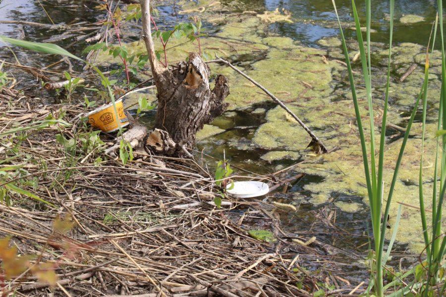 Photo of trash at Josey Ranch Lake Park